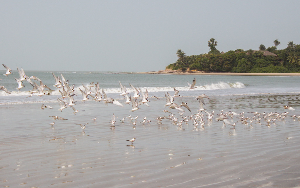 Cap Skirring Senegal playa gaviotas